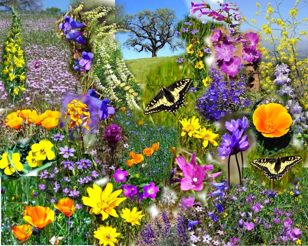 Spring Flowers New HD Wallpapers   Wallpapers 1024x819