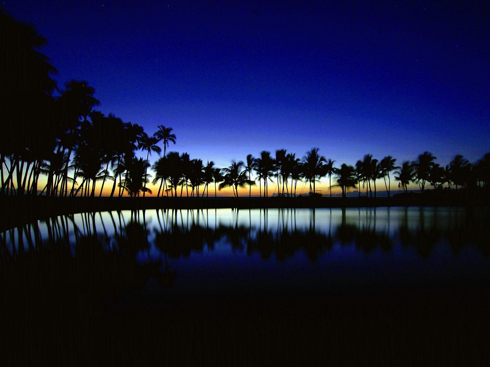 Palm Silhouette Big Island Hawaii Wallpapers HD Wallpapers 1600x1200
