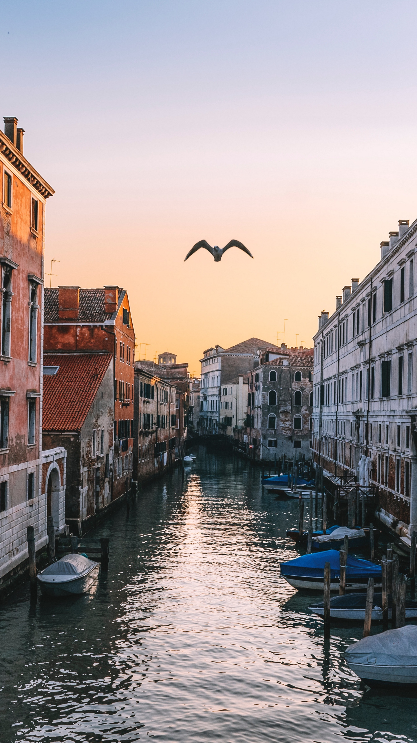 Download wallpaper 1440x2560 venice italy canal seagull river 1440x2560