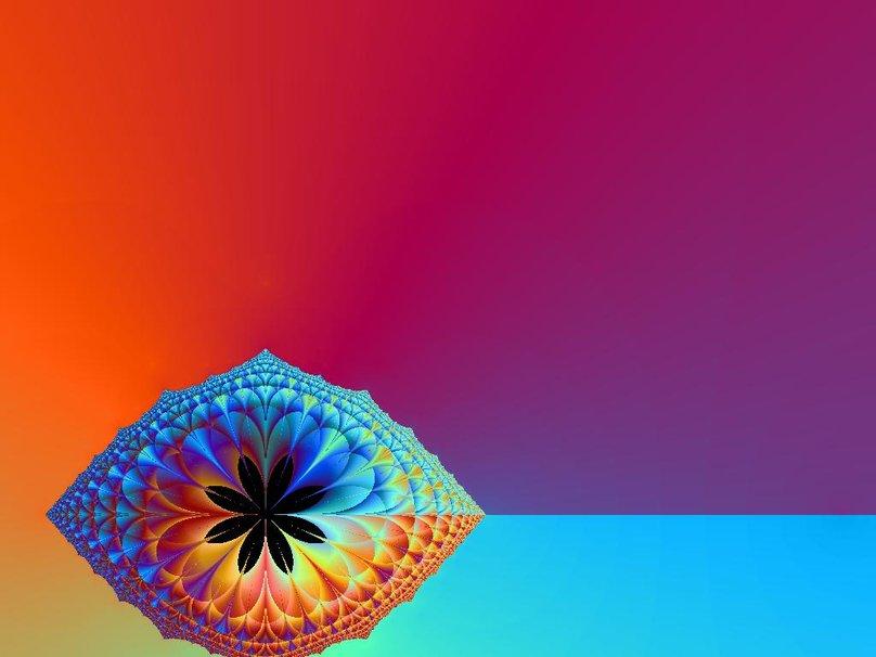Sunset Coral Flower wallpaper   ForWallpapercom 808x606