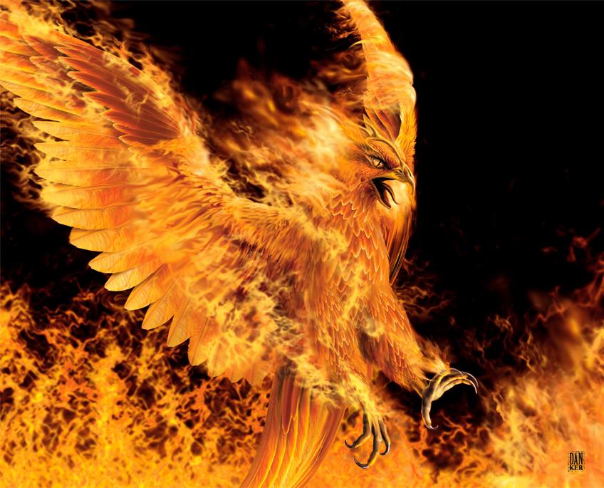 71 phoenix bird wallpaper on wallpapersafari - Fenix bird hd images ...