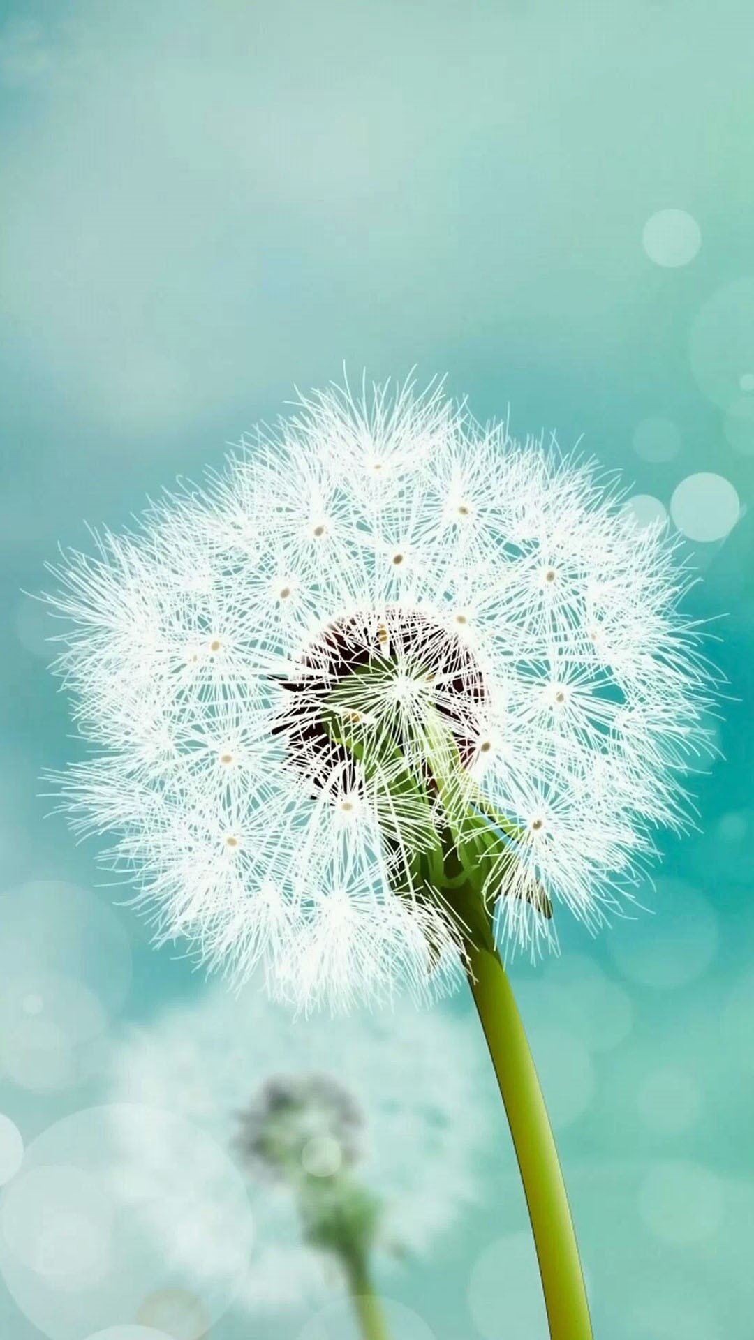 Dandelion flower Samsung HD wallpaper 1080x1920 1080x1920