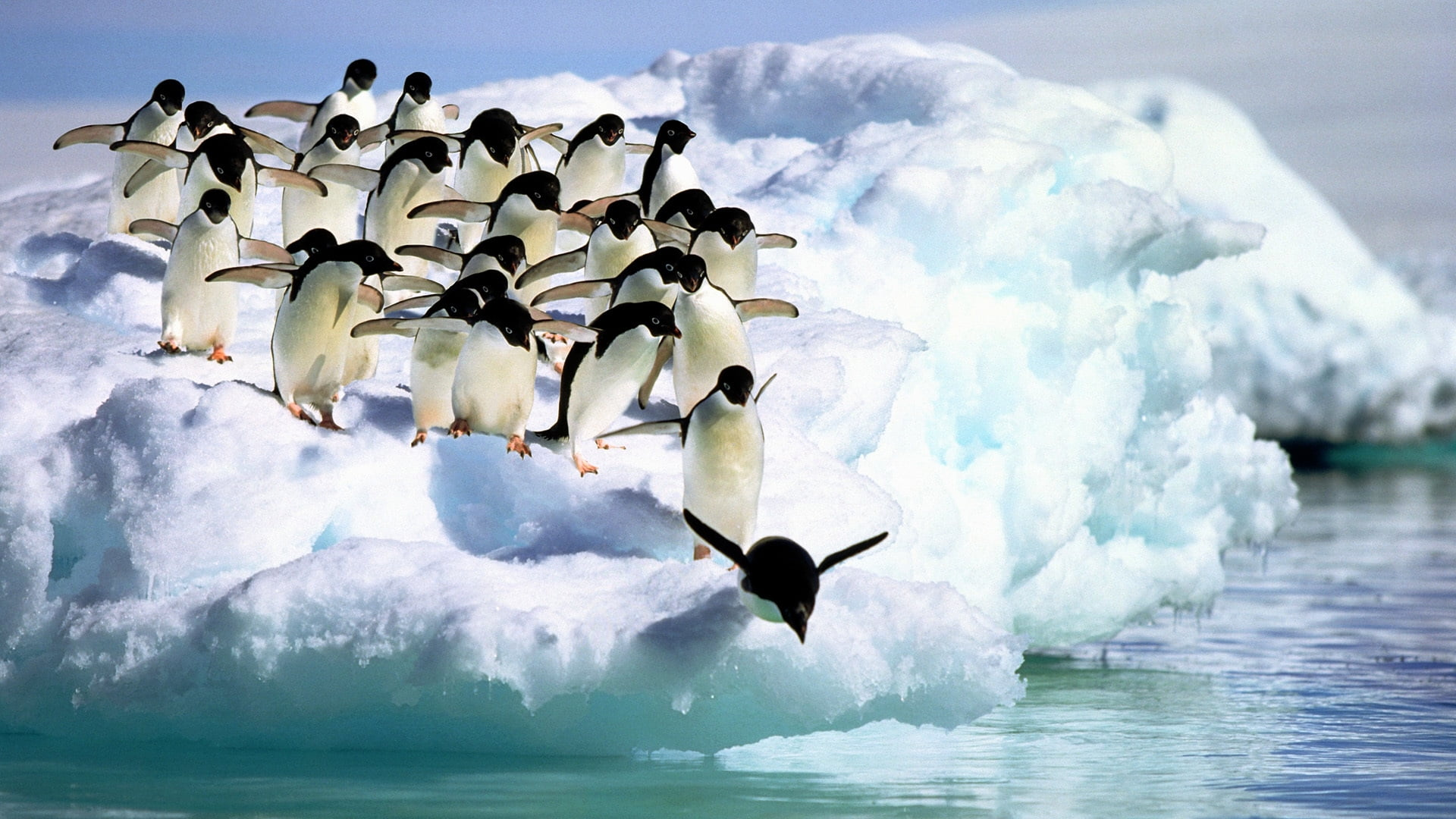 Penguins diving HD wallpaper Wallpaper Flare 1920x1080