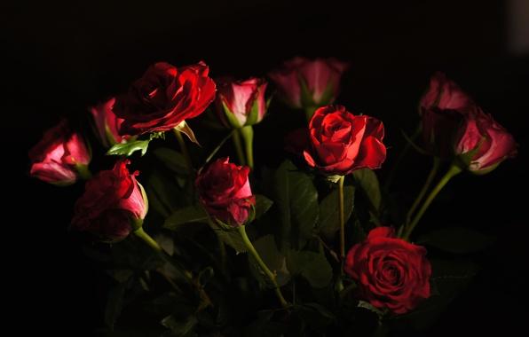 Wallpaper rose bud petals a bouquet light wallpapers flowers 596x380