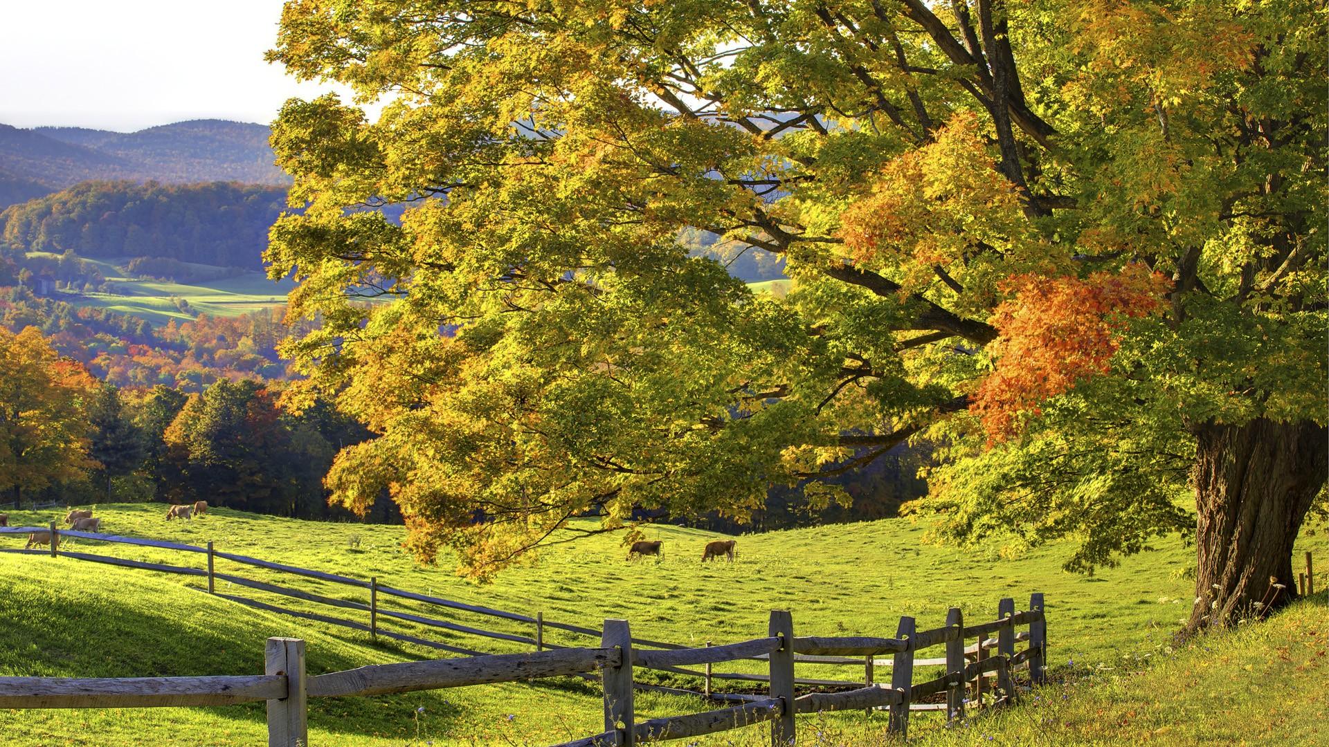 autumn wallpaper woodstock images 1920x1080