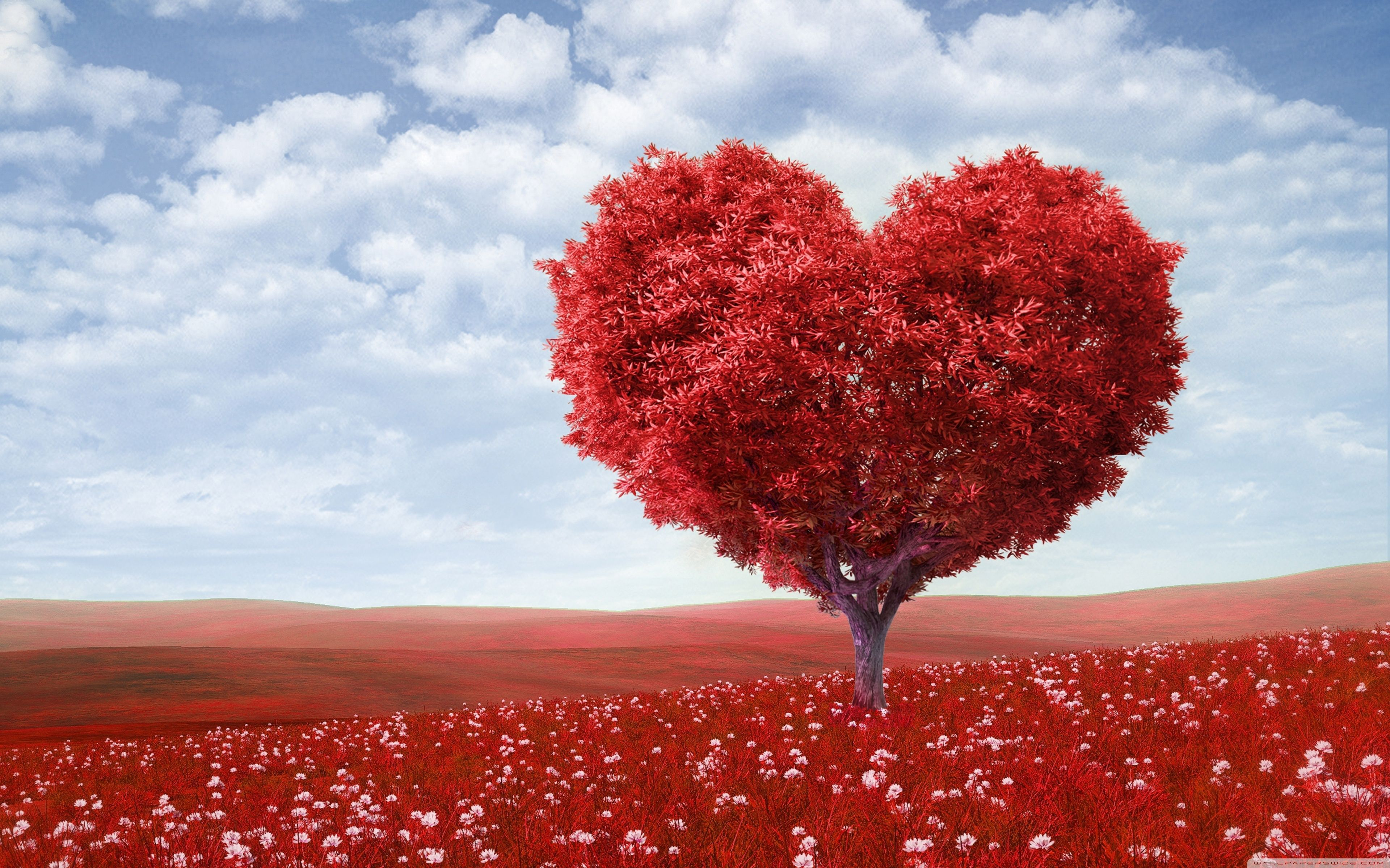 Valentines Day Desktop Wallpapers   Top Valentines Day 3840x2400