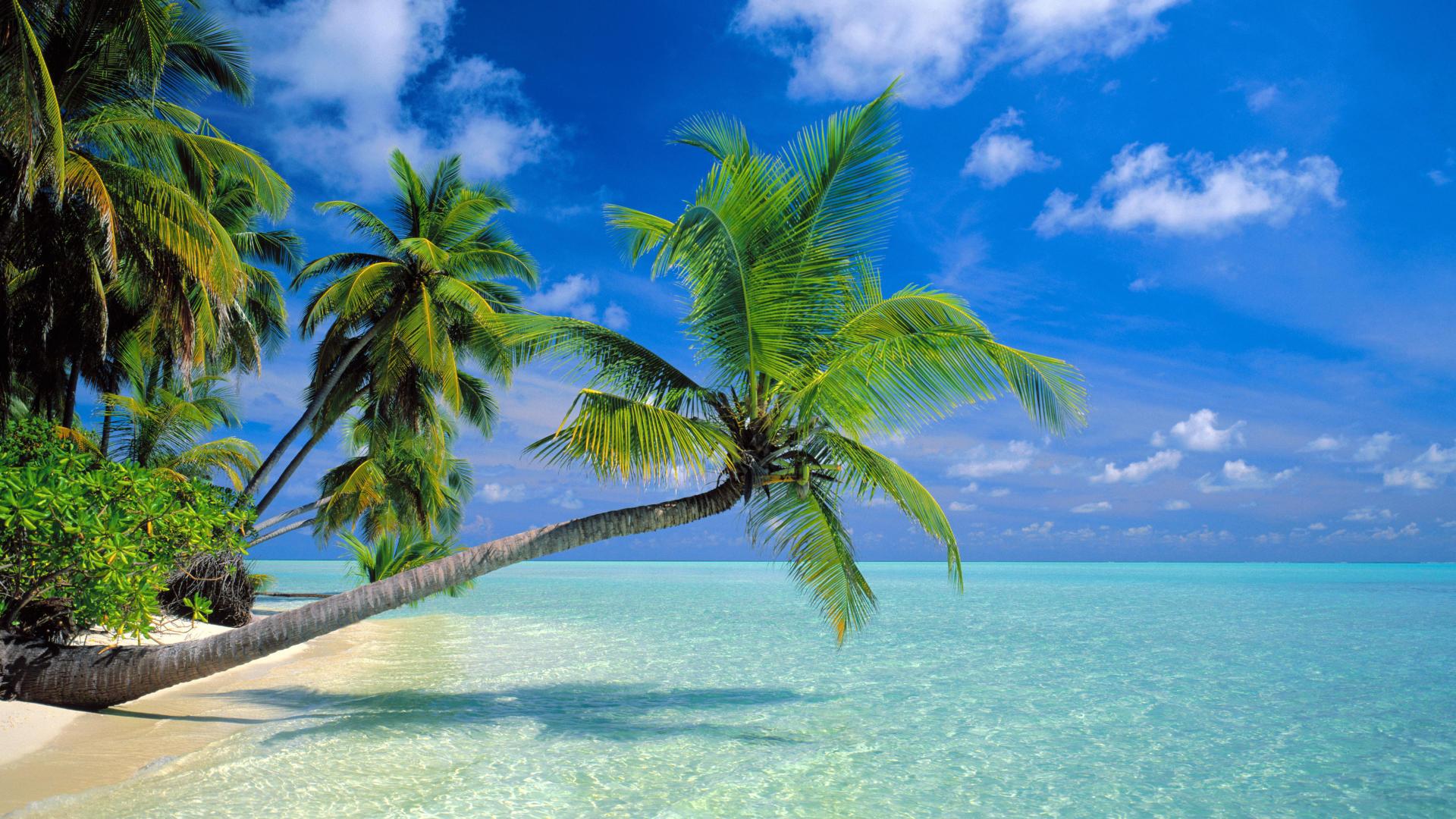 Another Paradise Maldives 3939 Wallpaper Wallpaper hd 1920x1080
