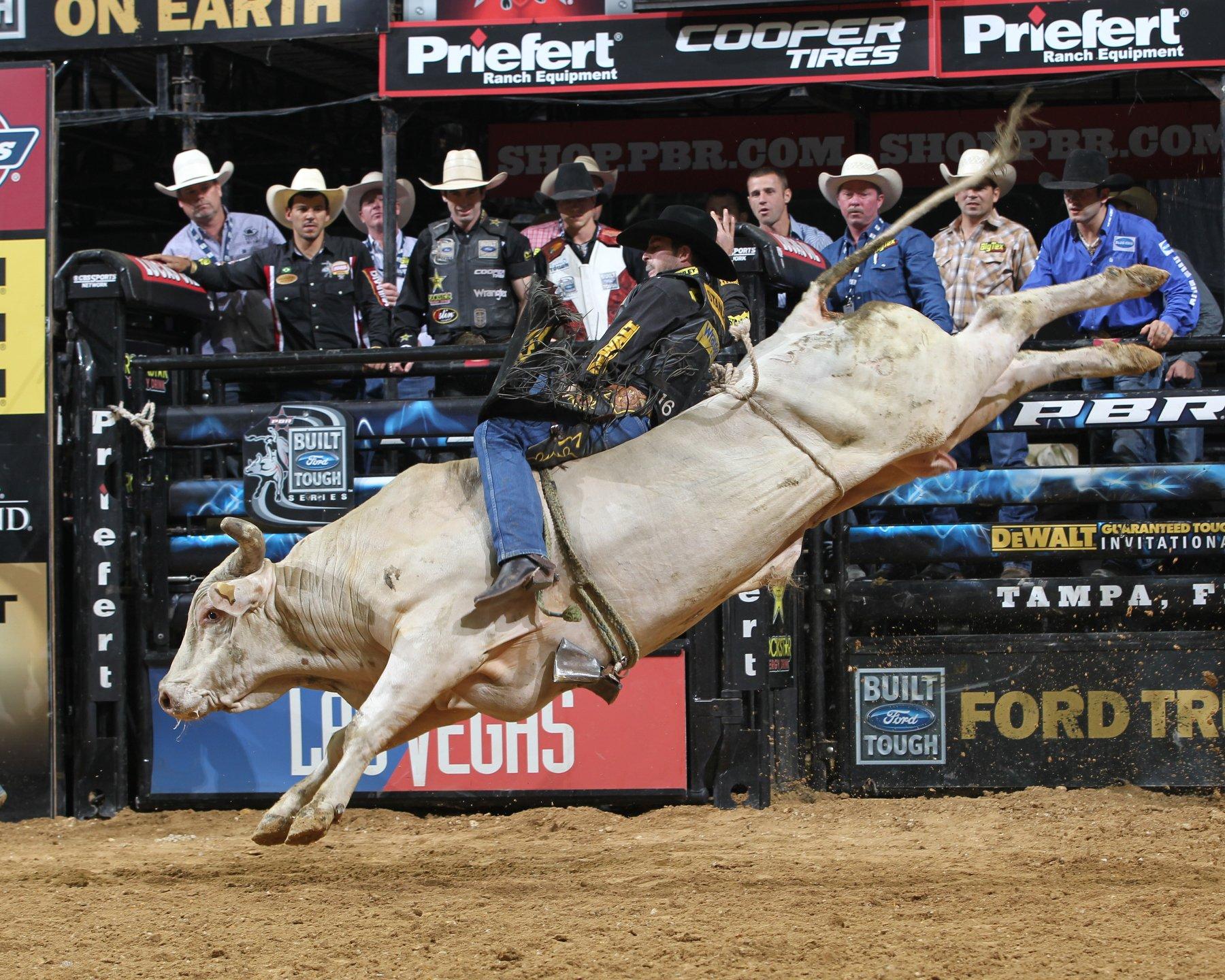 Free download bull riding bullrider