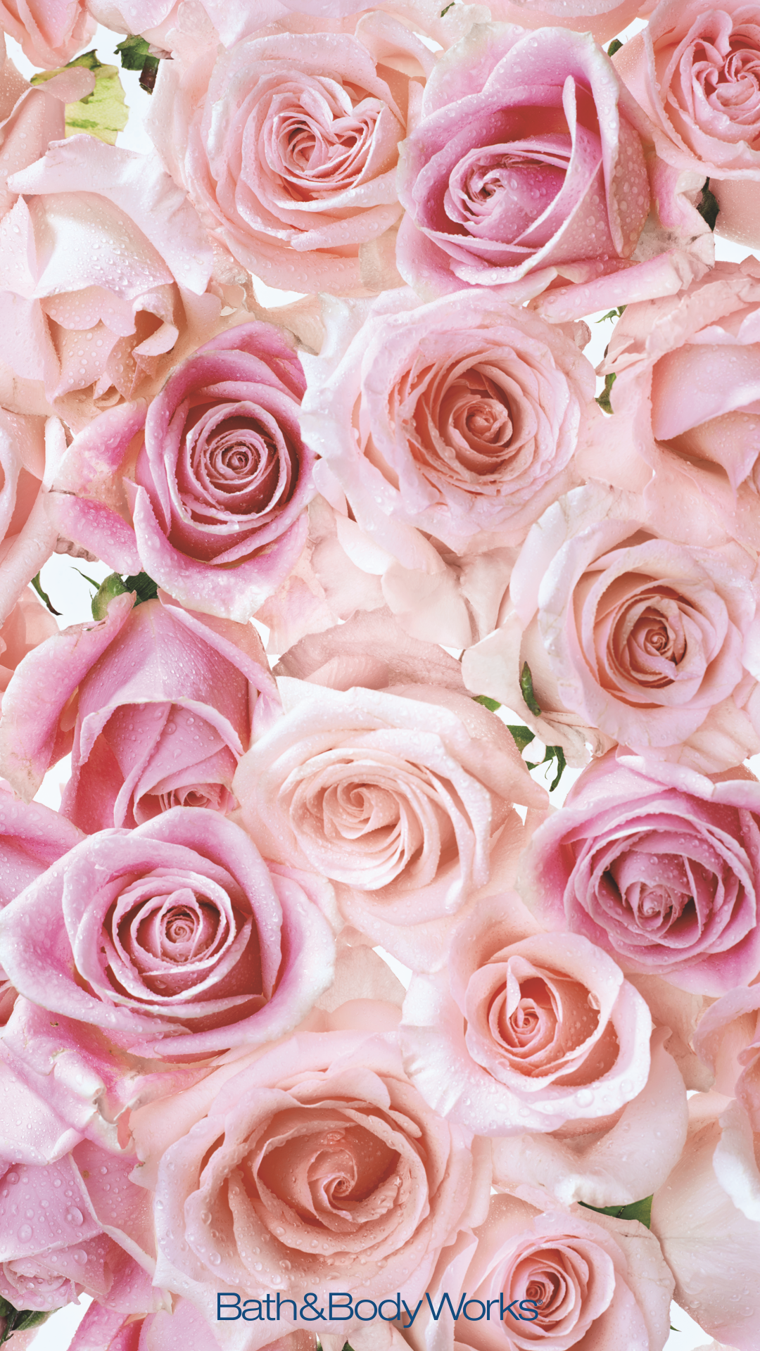 Pin by Bath Body Works on Now Trending Rose in 2019 Flower 1080x1920