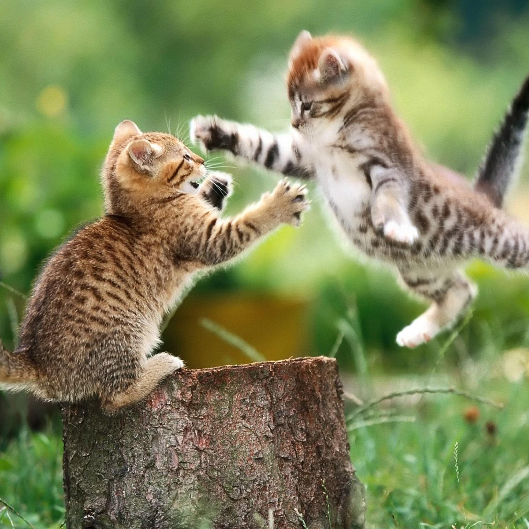 cats epic funny hd wallpaper HD Wallpapers 2048x2048