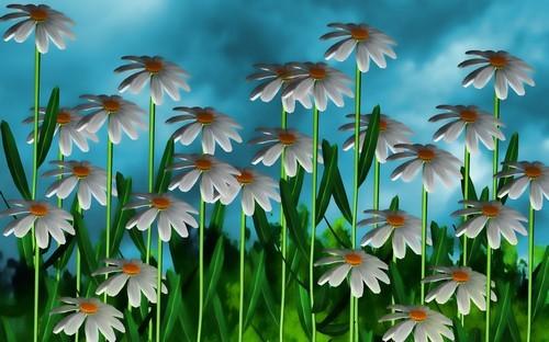50 Beautiful Flower Wallpapers Download Wallpaper 500x312