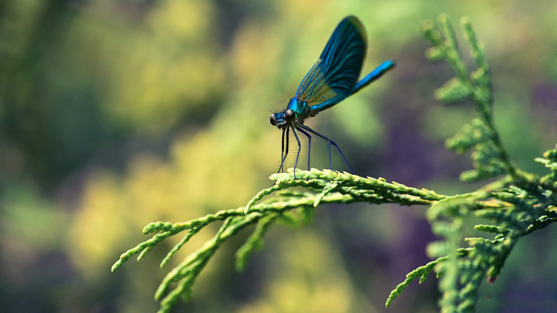 Blue Dragonfly Macro Wallpaper   New HD Wallpapers 1920x1080