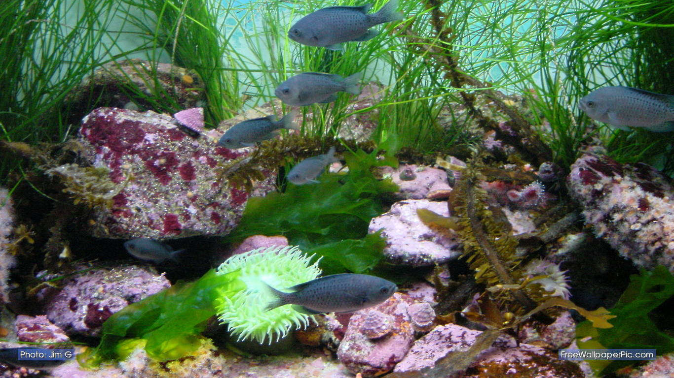 aquarium screensaver free flowers - photo #25