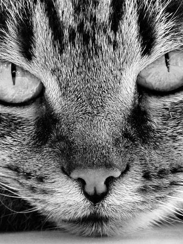 Cute Gray Cat with Green Eyes screensaver for Amazon Kindle 3 375x500