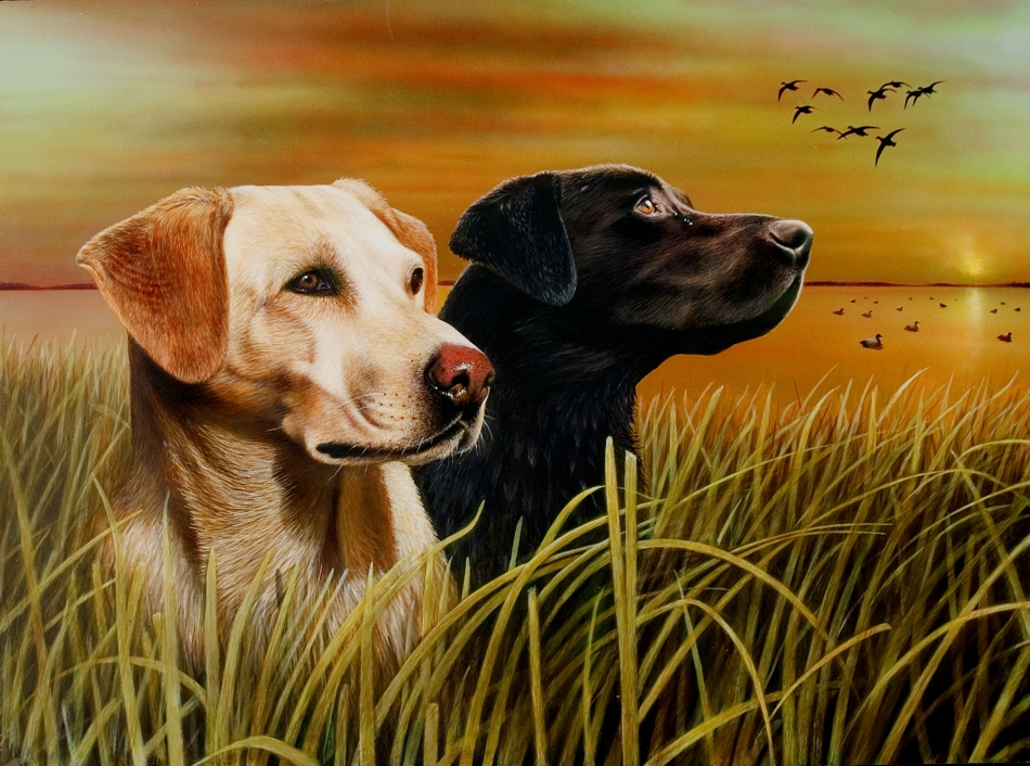 Hunting Dog Videos Download