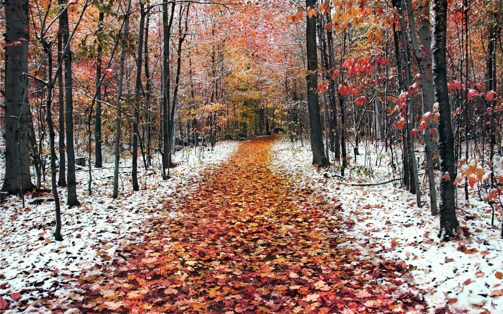 Late autumn the first snow fell Desktop wallpapers 1680x1050 1680x1050
