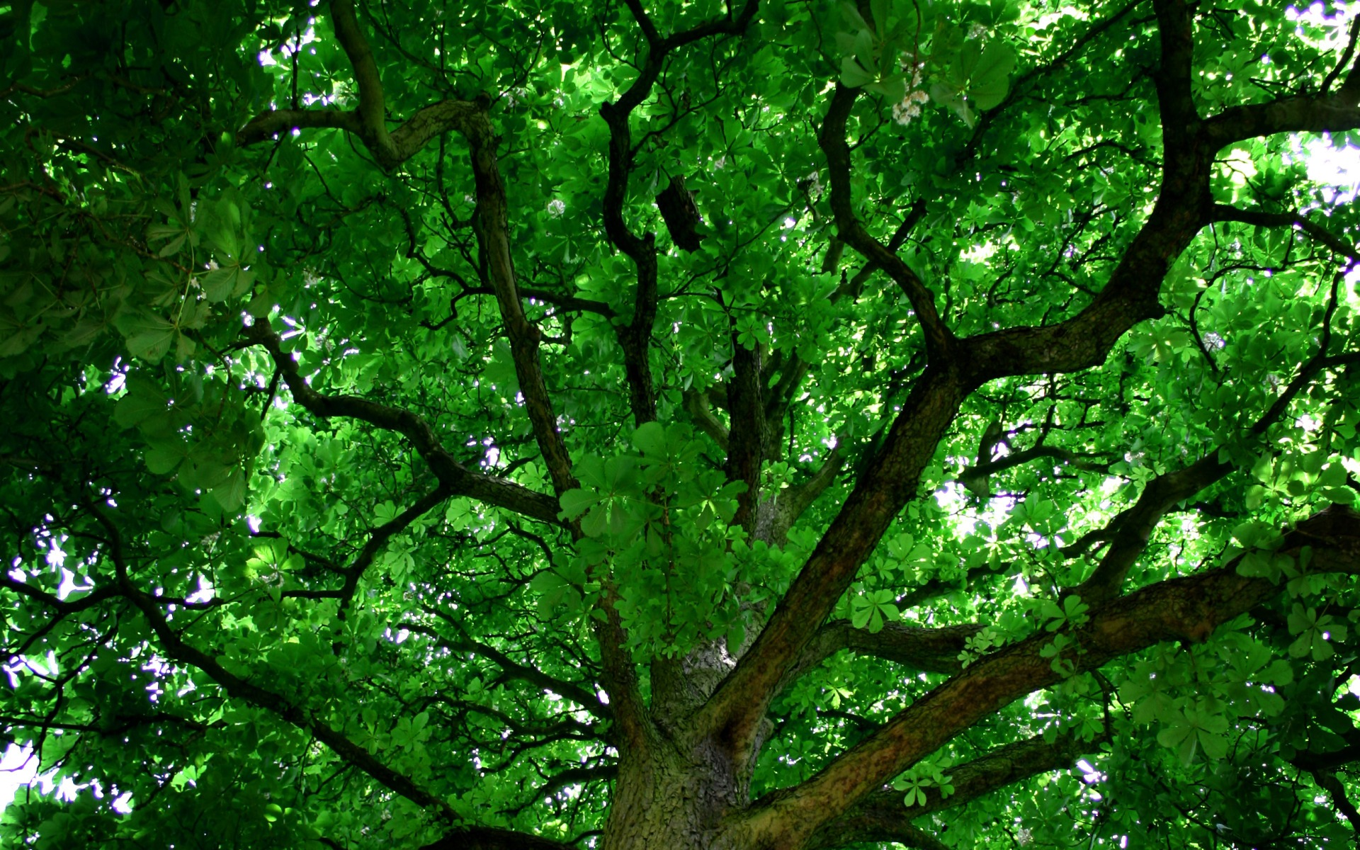 gallery of tree wallpaper images with tree wallpaper