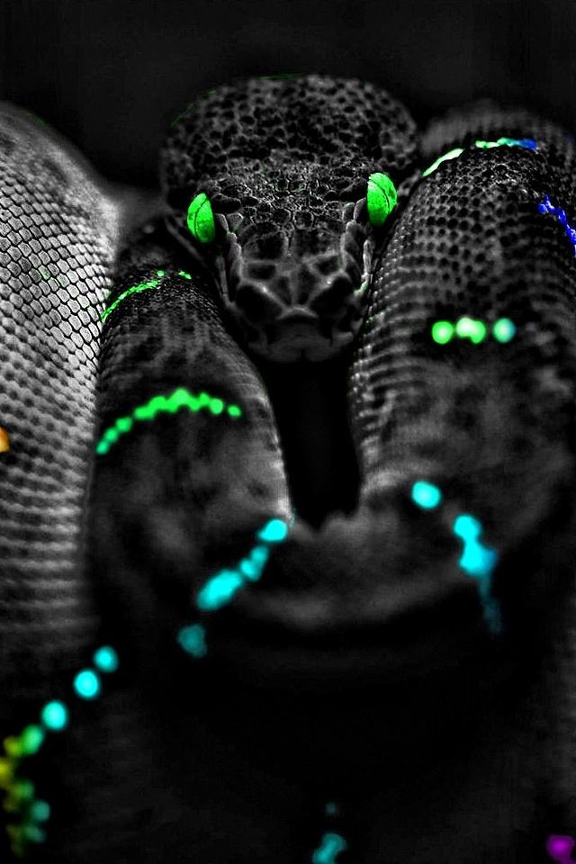 snake eyes   wallpaper 640x960