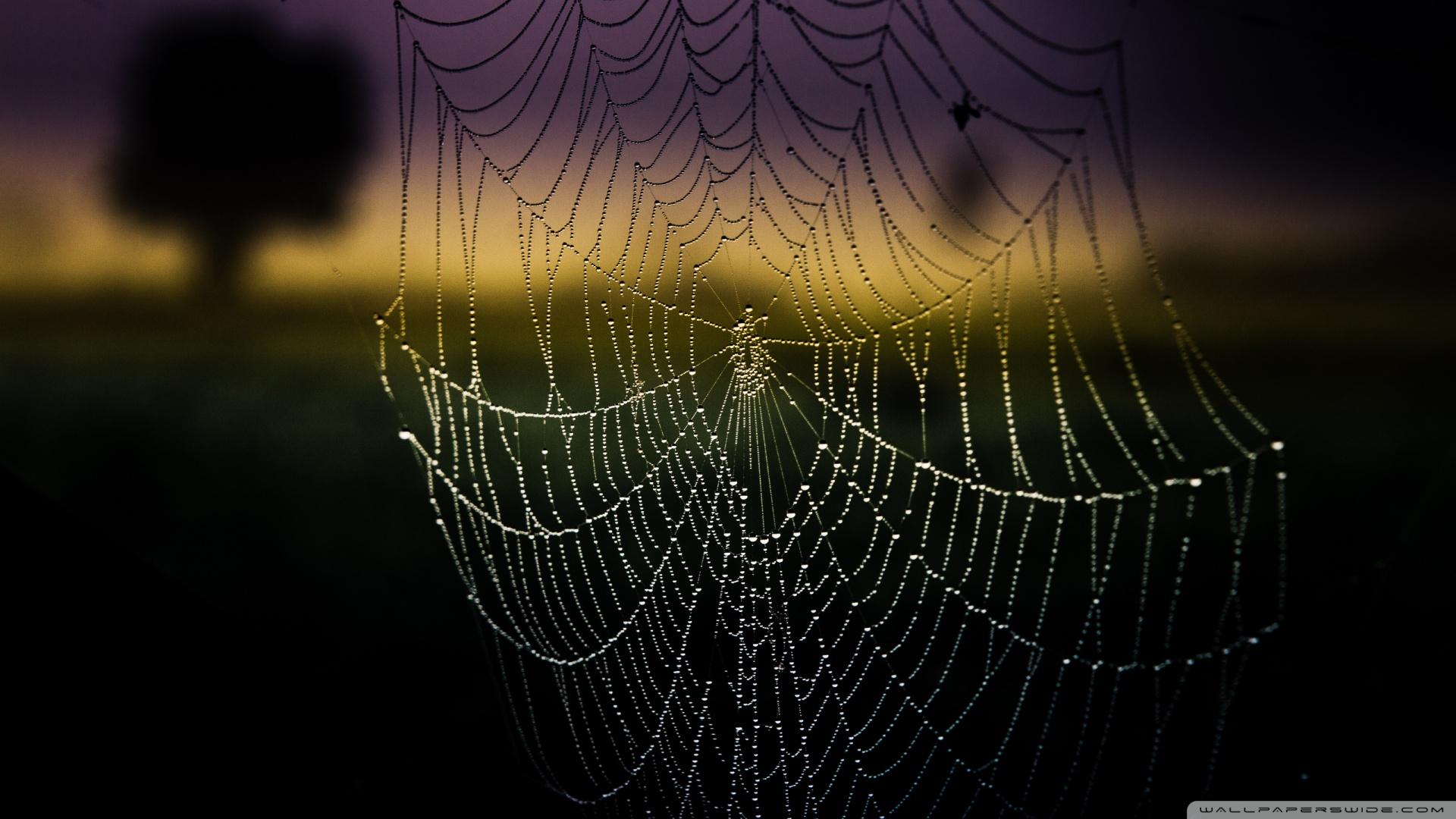 Spiderweb Background Wallpaper 1920x1080 Spiderweb Background 1920x1080
