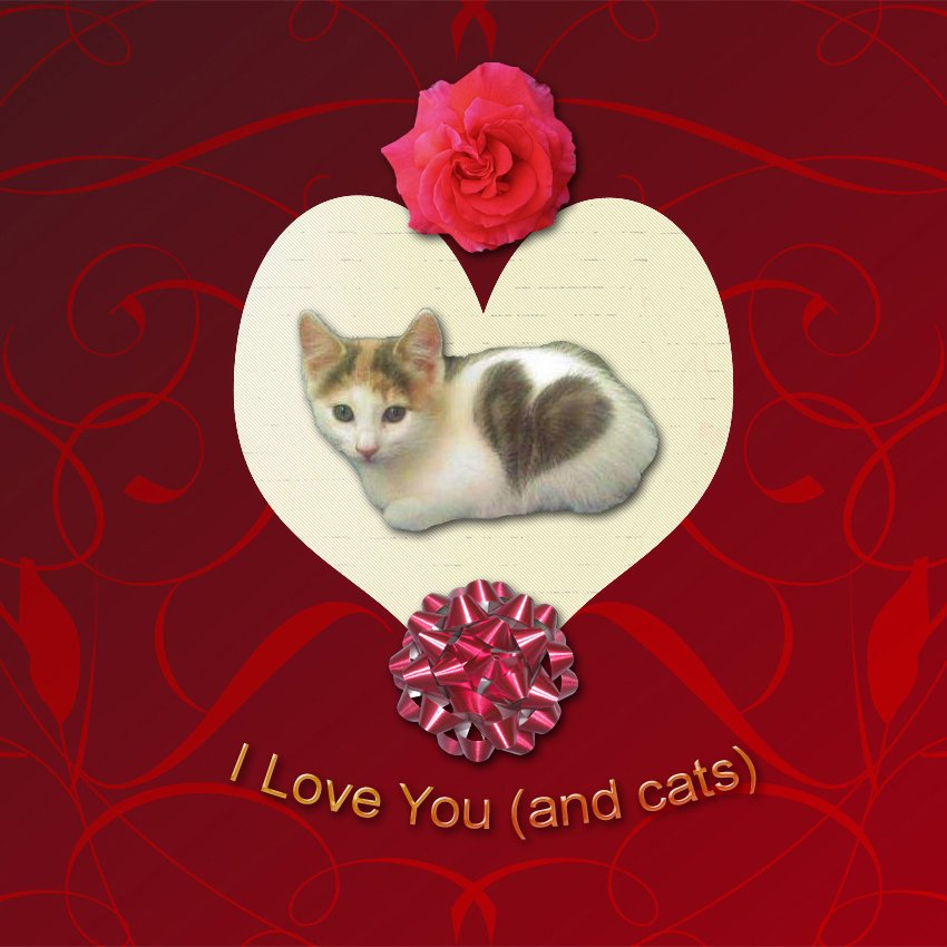 Valentines Day Card For Cat Lovers Pictures Of Cats 850x850