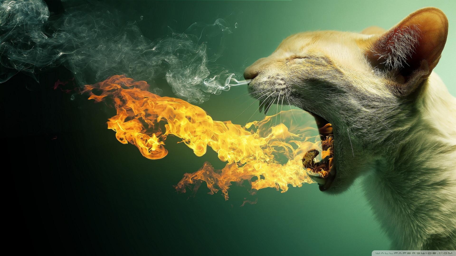 Flaming Cat Wallpaper 1920x1080 Flaming Cat 1920x1080