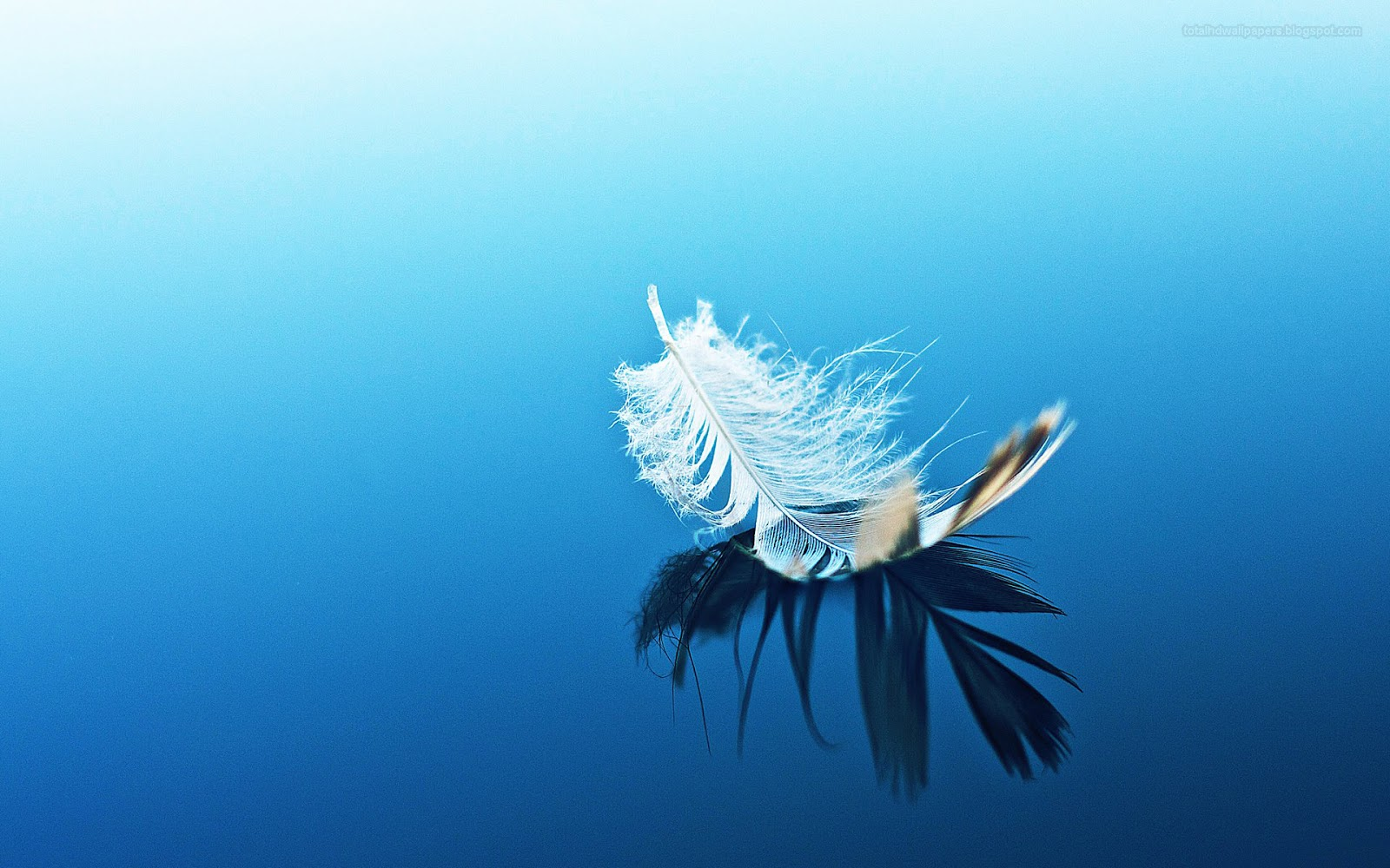 Feather wallpapers hd 1600x1000