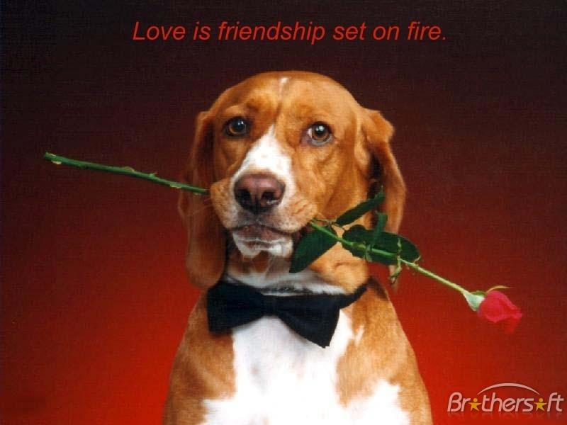 A Valentine Wish Screensaver A Valentine Wish Screensaver 800x600