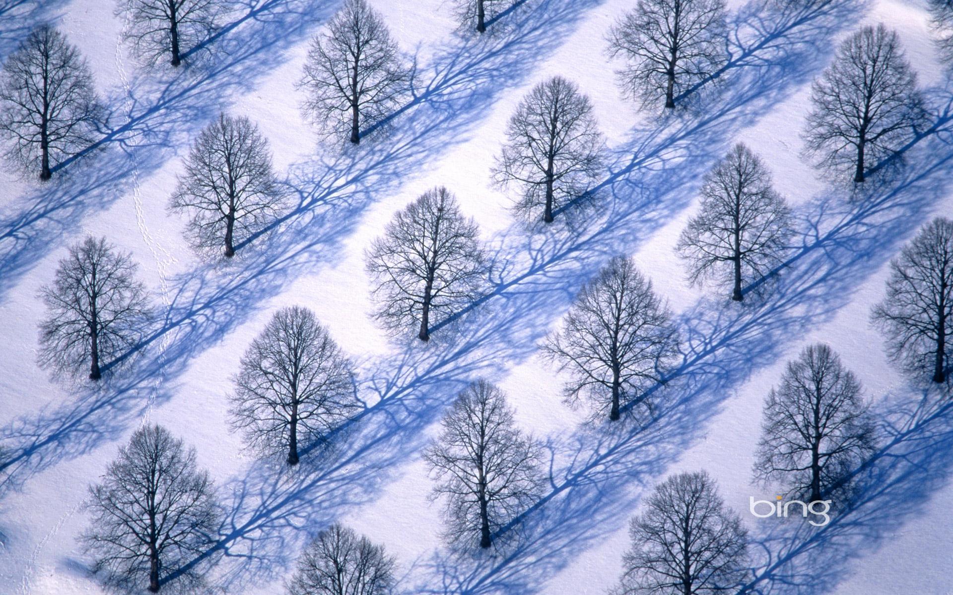 Trees in winter landscape HD Bing Wallpaper Archive 1920x1200