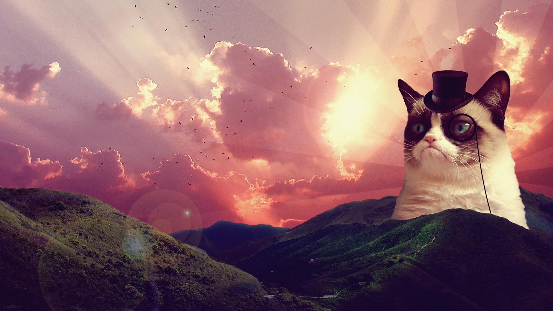 Fancy Grumpy Cat Wallpaper 1920x1080
