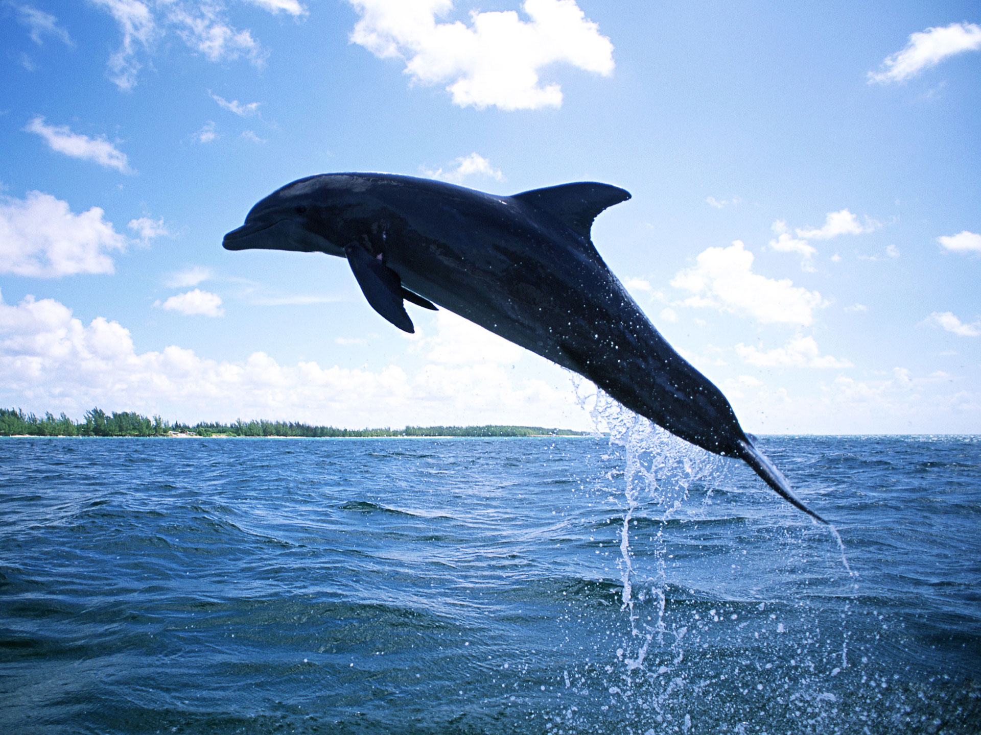 Dolphin Diving Wallpapers HD Wallpapers 1920x1440