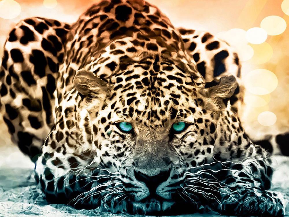 Animals Wallpapers Download QWR5VUY WallpapersExpertcom 1000x750