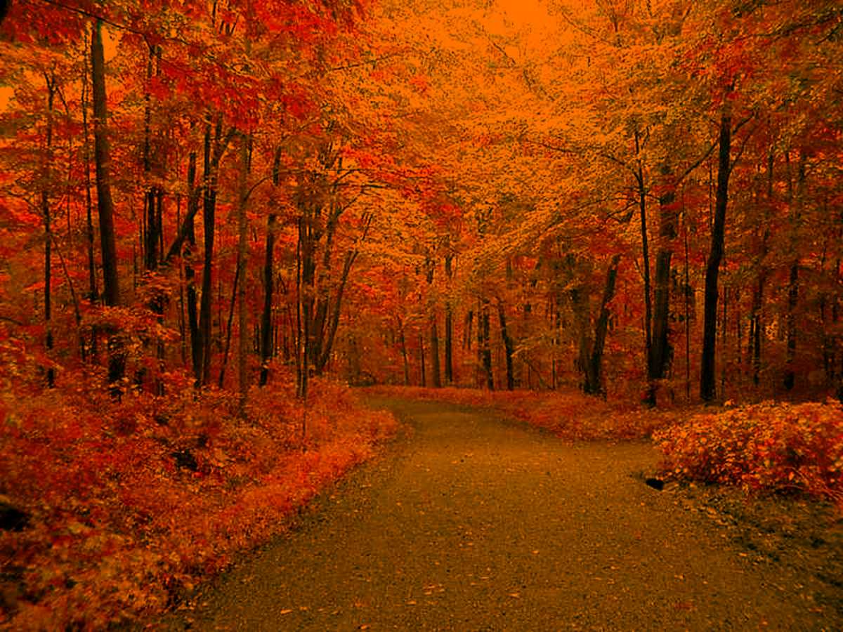 Autumn Road Background Twitter Backgrounds Wallpaper Images 1200x900