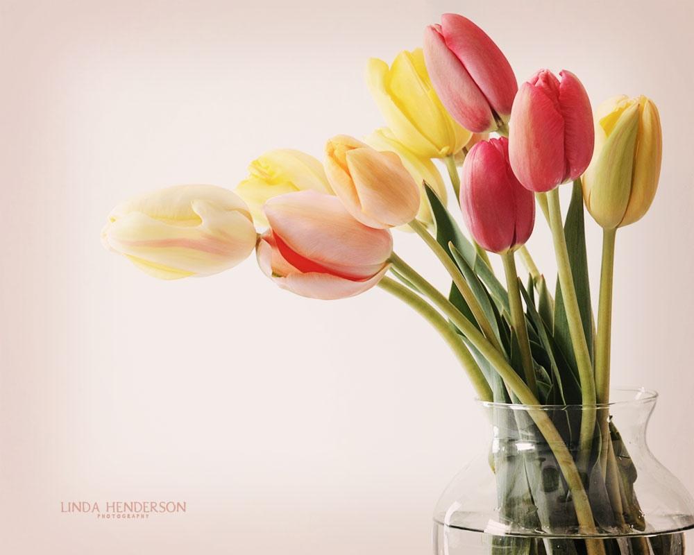 [40+] Flowers In Vase Wallpaper On WallpaperSafari
