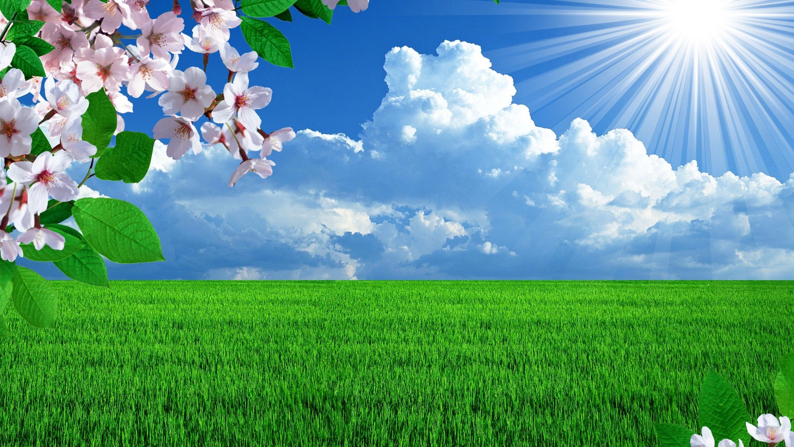Beautiful spring Widescreen Wallpaper   14996 2560x1440