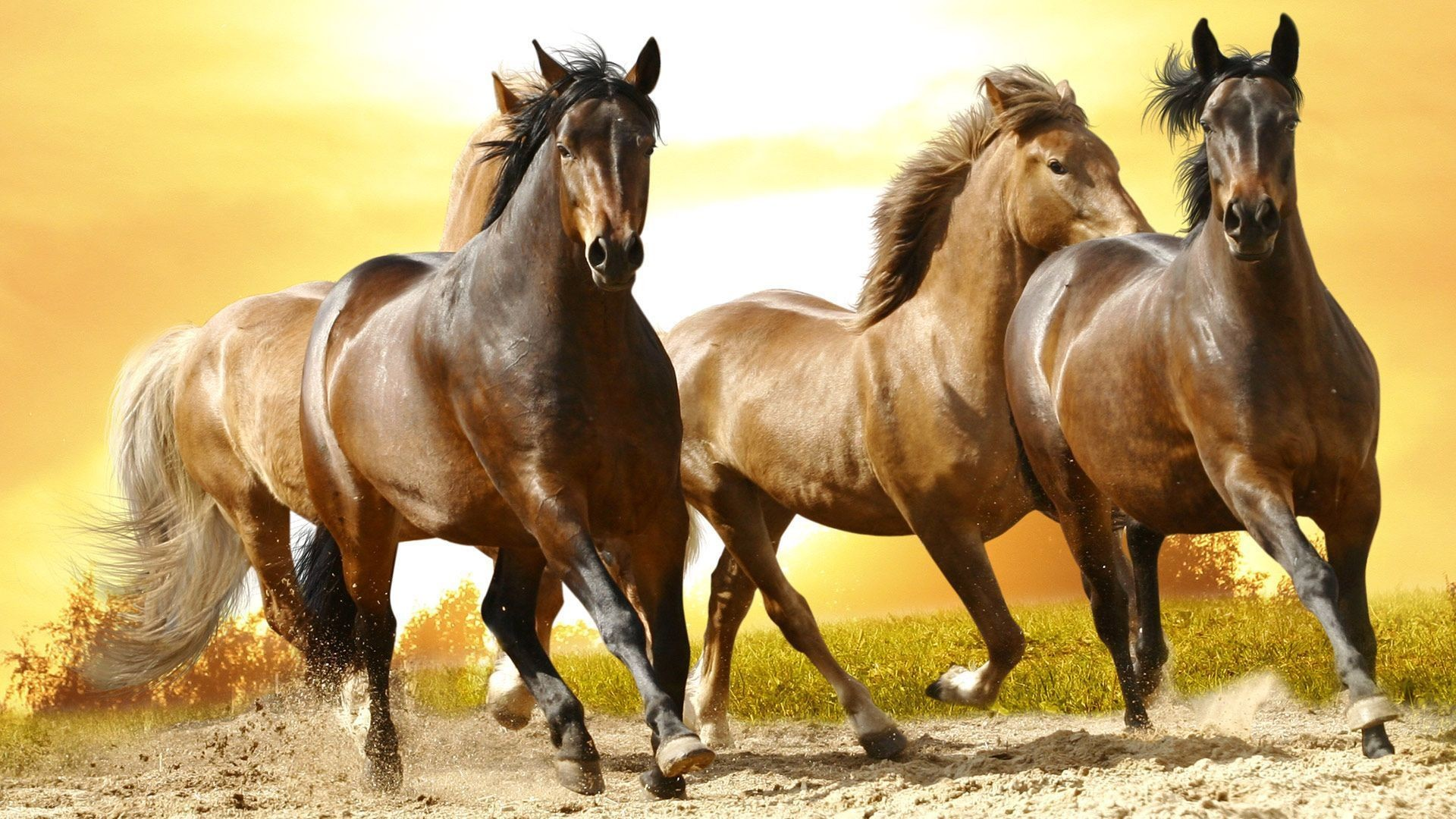 Free Download 57 Beautiful Horse Wallpapers On Wallpaperplay