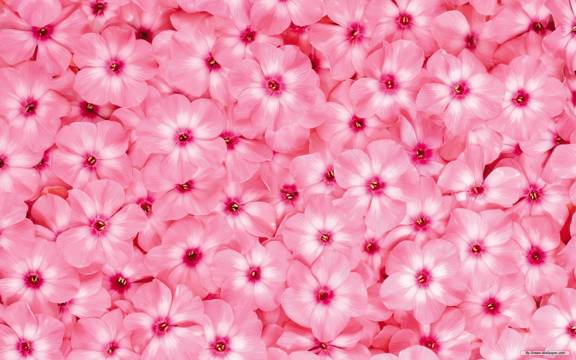 Wallpaper   Flower wallpaper   Beautiful Flower wallpaper 1920x1200