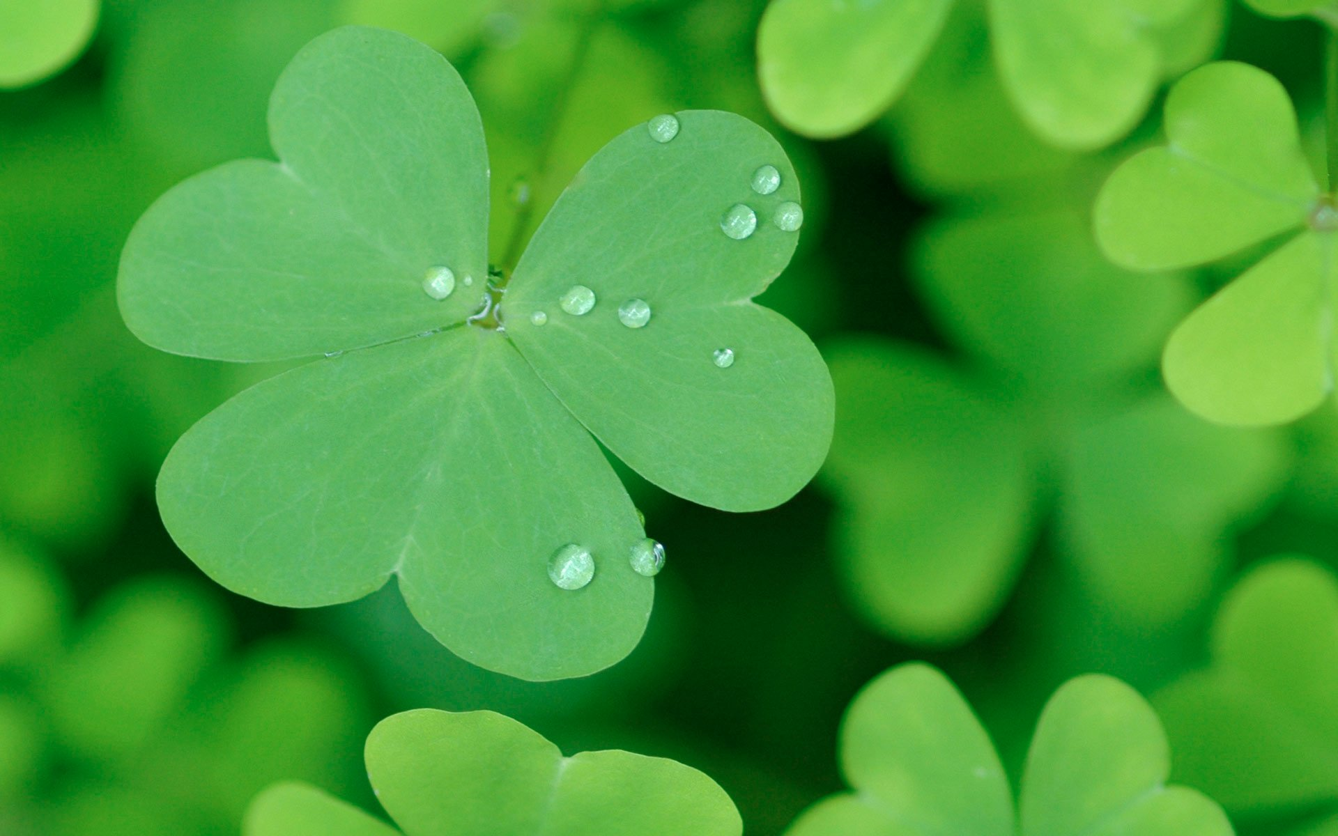 Happy St Patricks Day 2014 wallpaper   1294428 1920x1200