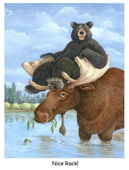 Moose and Bear Nice Rack 501x658