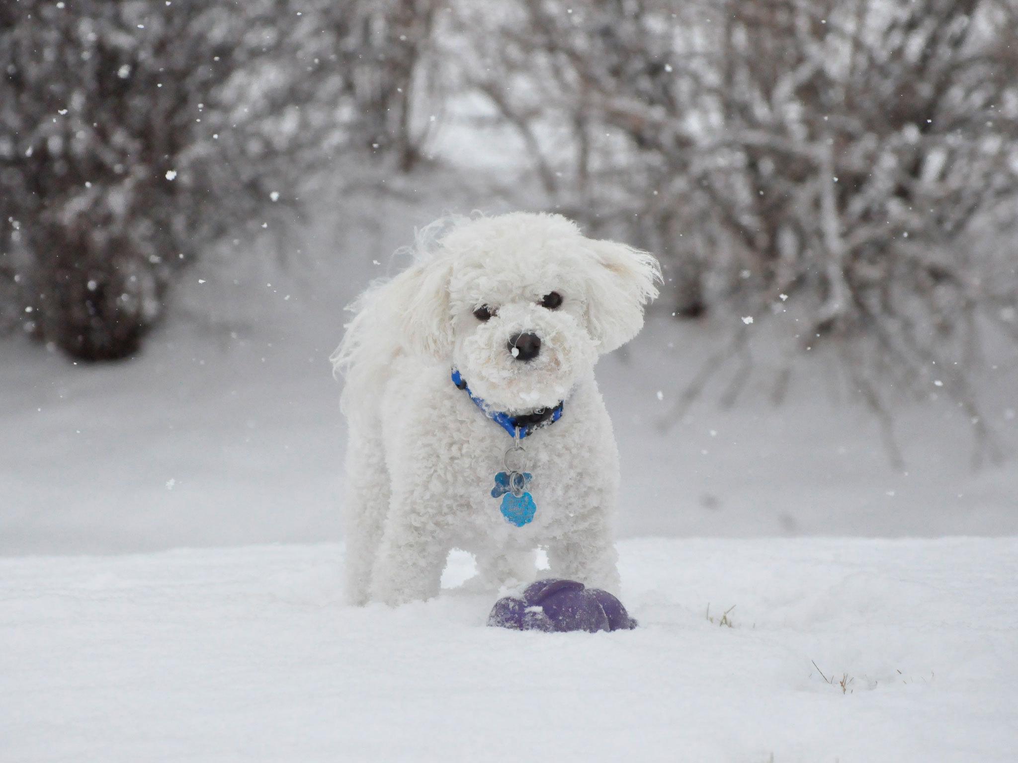 щенок снег puppy snow  № 2001810 бесплатно