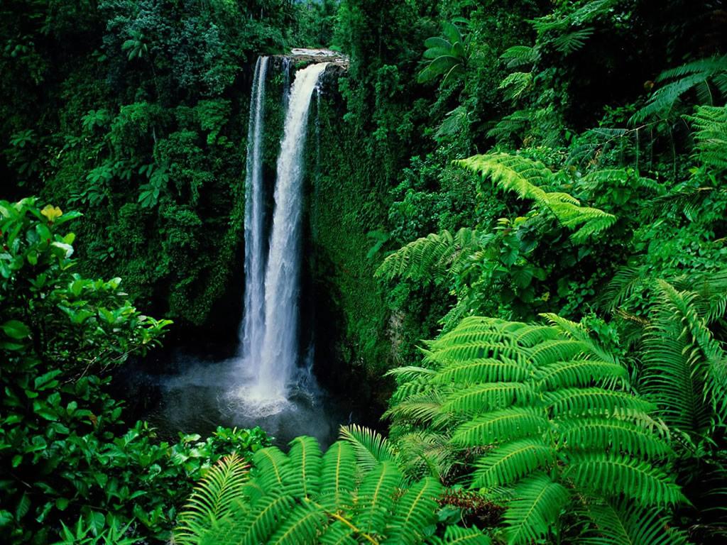 rainforest   Rainforest Wallpaper 32472978 1024x768
