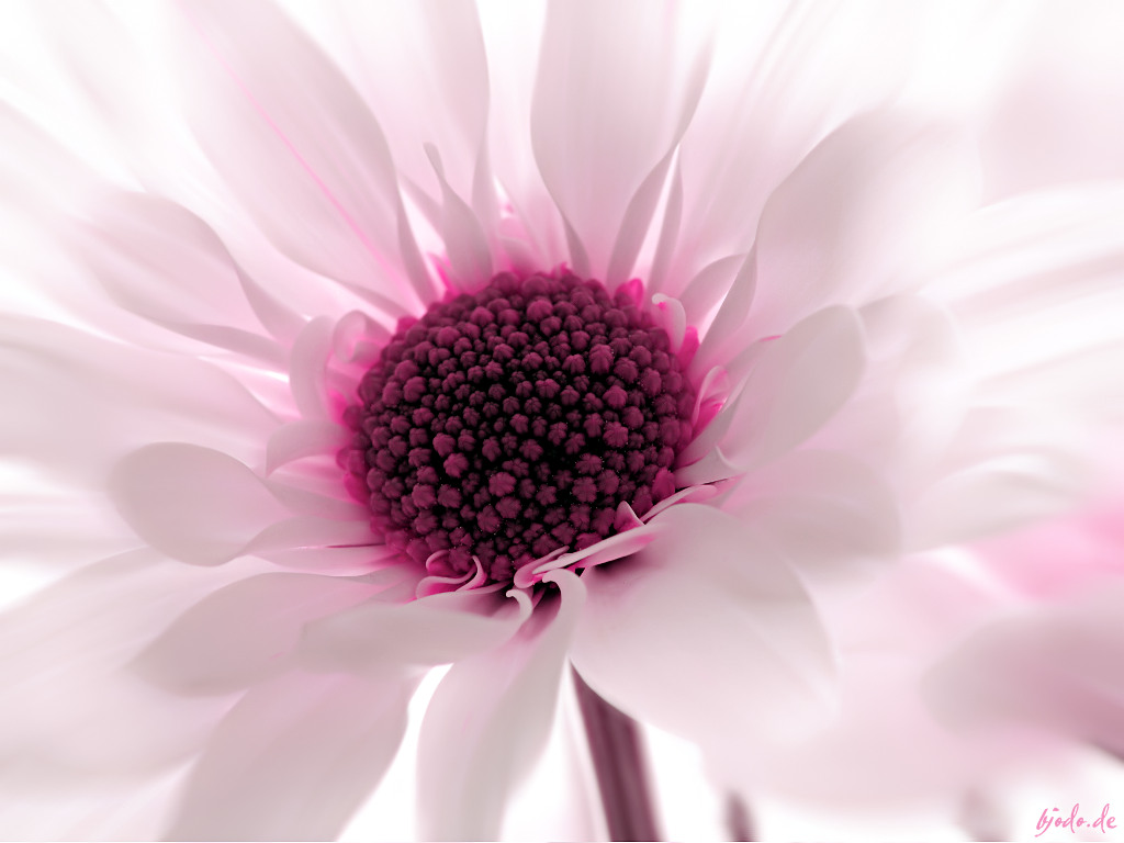 Wallpapers Flower Wallpapers 1024x768