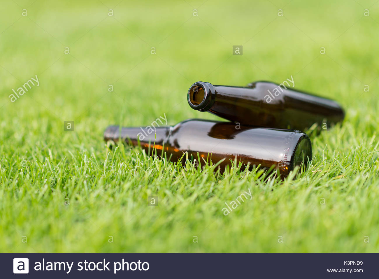 Empty beer bottles in a grass field with a vague background Stock 1300x957