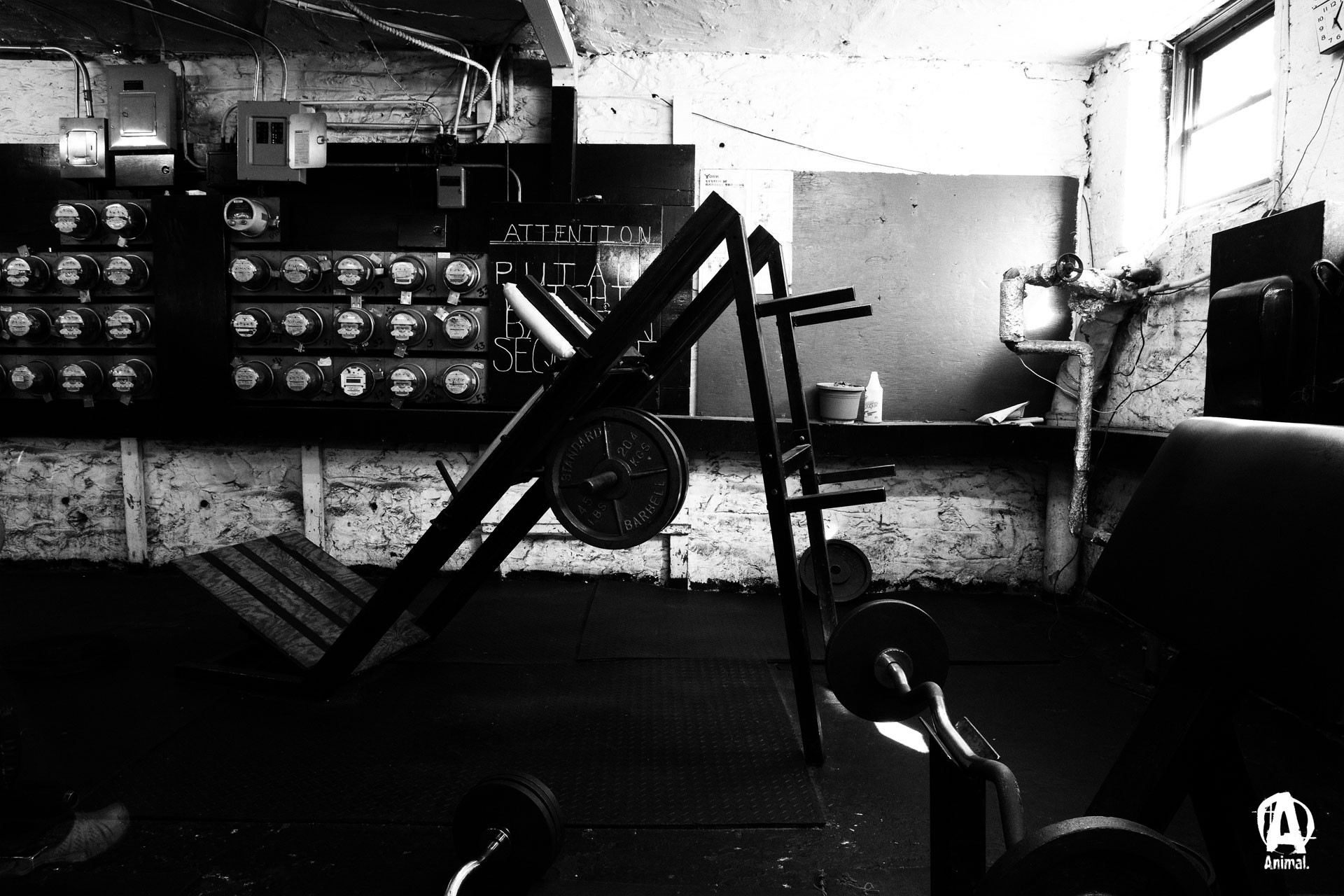 Gym AnimalPakcom Gym Pump 1920x1280