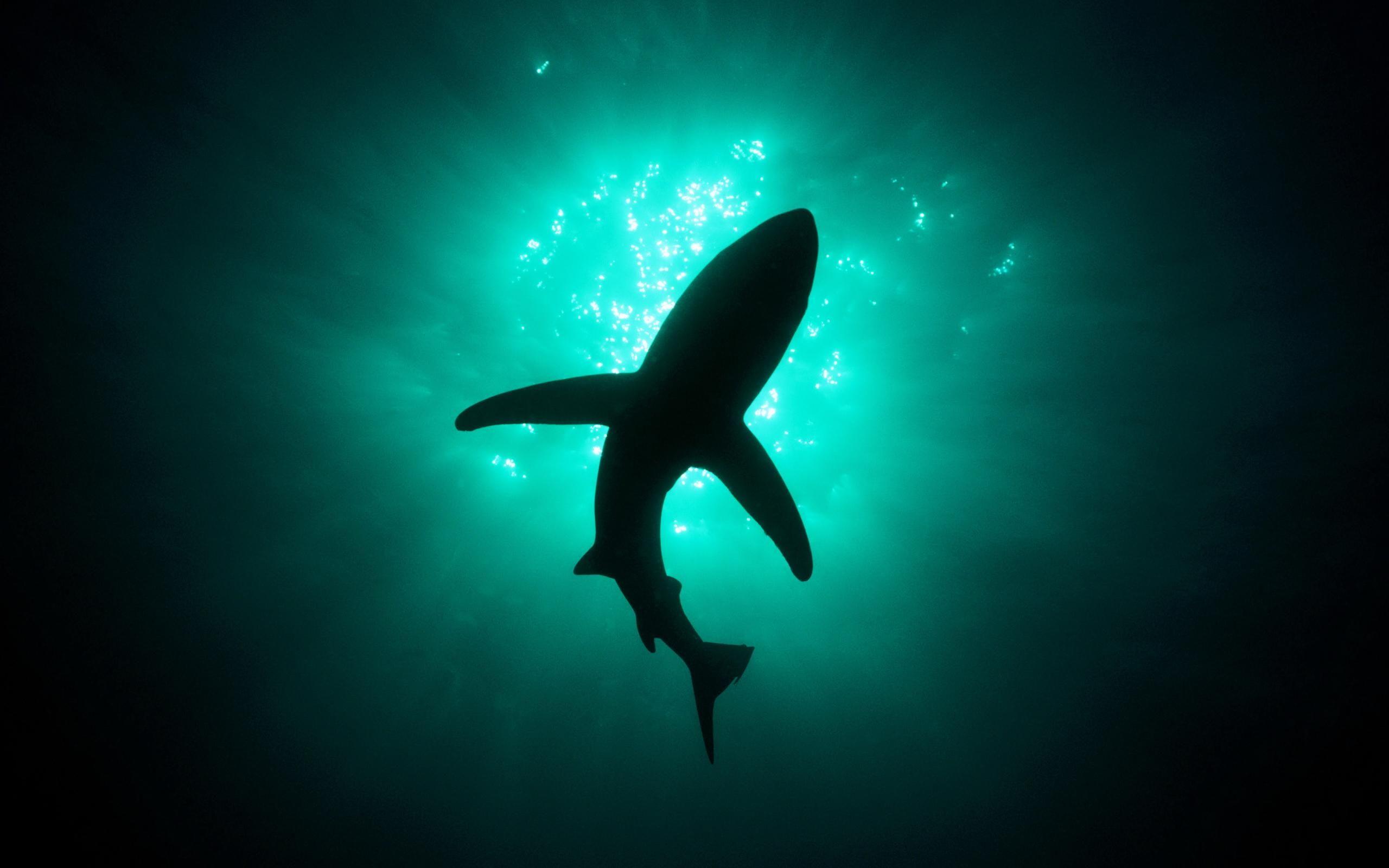 Cool Shark Wallpapers   Top Cool Shark Backgrounds 2560x1600