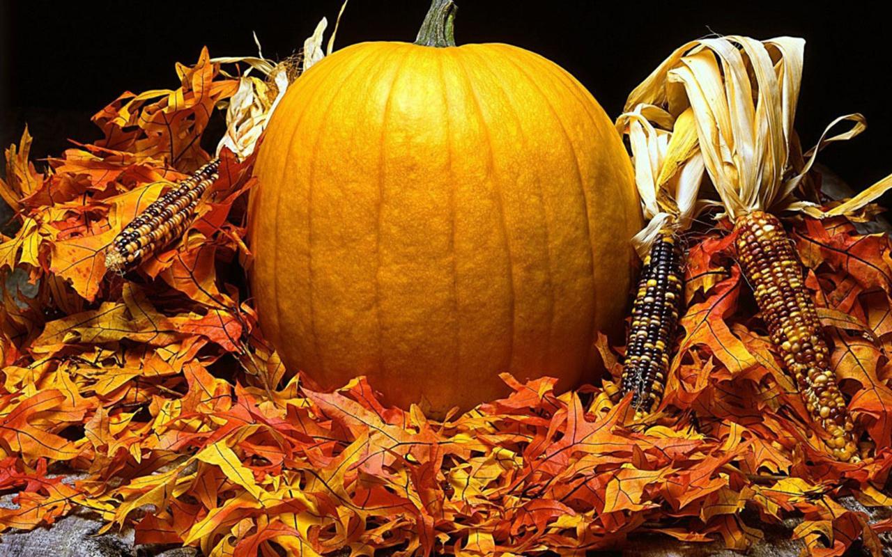 Pumpkins Pumpkins Everywhere   Halloween Wallpaper 24469487 1280x800