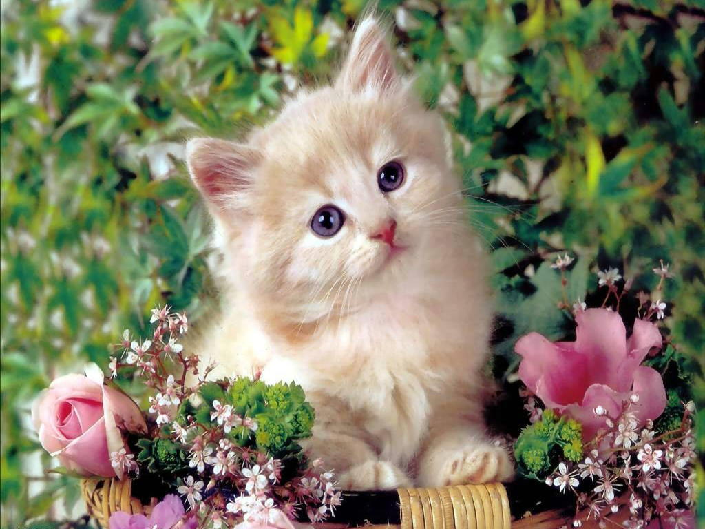 Cute Cat Wallpaper wallpaper Cute Cat Wallpaper hd wallpaper 1024x768