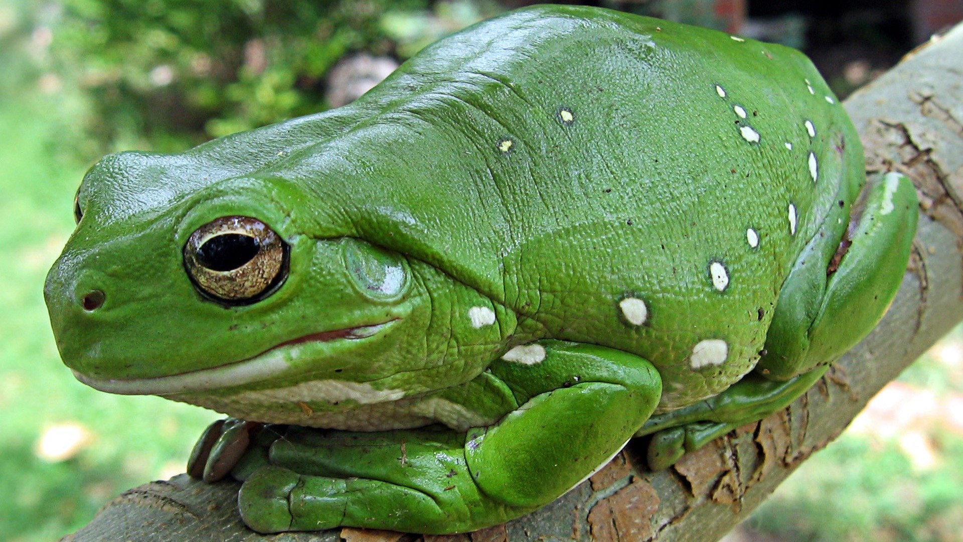 Amphibians wallpaper 1920x1080 58019 1920x1080