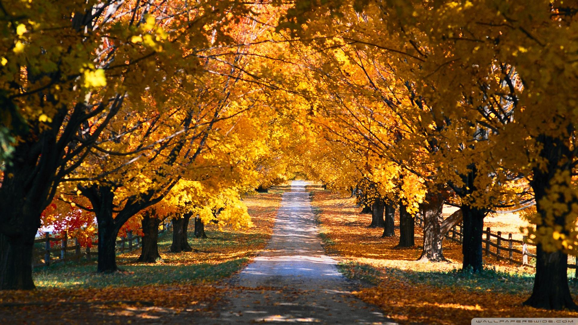 Fall scenes wallpaper and screensavers wallpapersafari - Pics of fall scenes ...