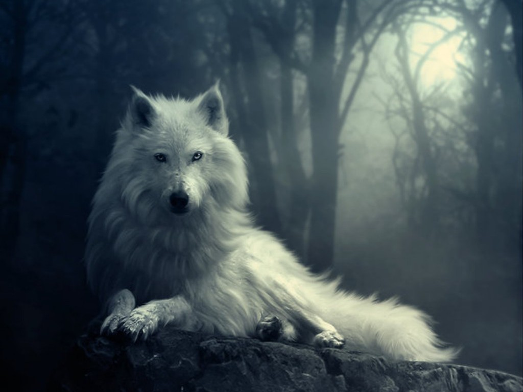 Wolf   yorkshire rose Wallpaper 21464369 1024x768