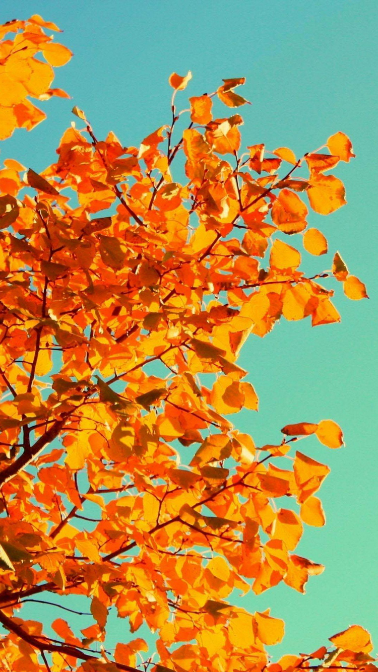 Autumn Fall Orange Tree Leaves iPhone 6 Wallpaper iPod Wallpaper HD 750x1334